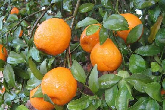 narangi01